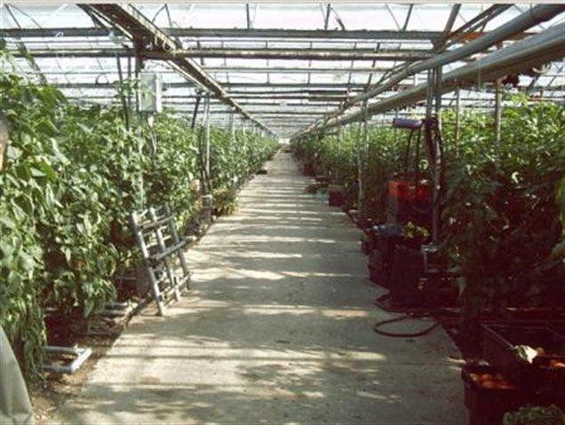Земельный участок 50000000 кв.м., Тосненский район ЛО